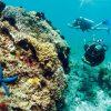 Những địa điểm lặn biển ngắm san hô siêu đẹp ở Phú Quốc