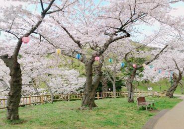 Những điểm ngắm hoa anh đào đẹp ngây ngất ở Hokkaido