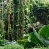 Khám phá vẻ đẹp của vườn bách thảo Singapore