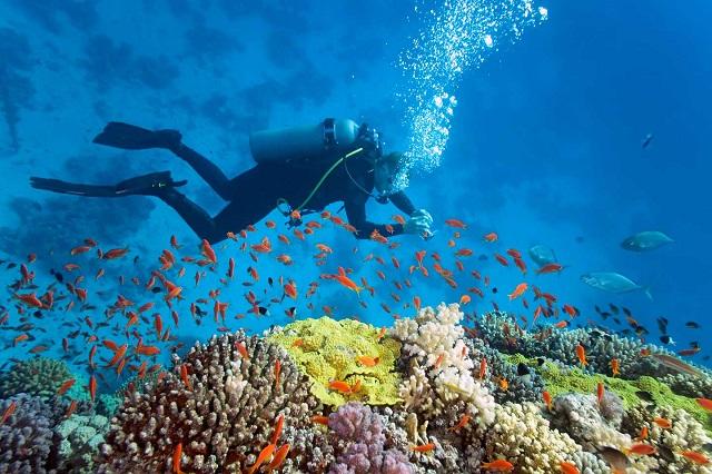 Tìm hiểu 3 hình thức lặn ngắm san hô nổi bật ở Phú Quốc