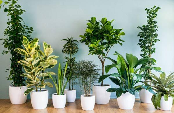 Những lợi ích cây giả trang trí mang đến những cho đời sống mà bạn cần biết