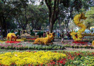 Chiêm ngưỡng những loài kì hoa dị thảo tại hội hoa xuân Tao Đàn
