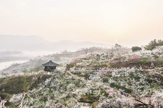 Top 3 địa điểm du lịch lý tưởng vào mùa xuân ở Hàn Quốc