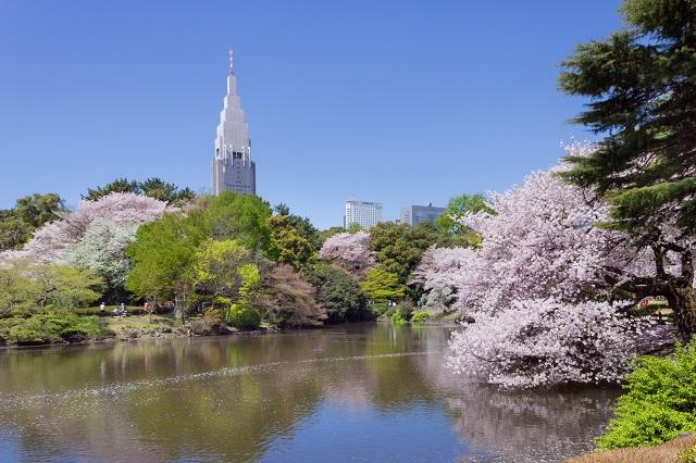 Mùa xuân ở công viên quốc gia Shinjuku Gyeon