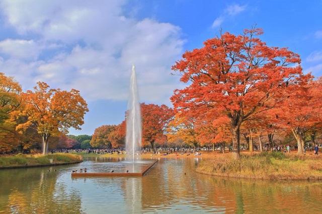 3 công viên xanh tuyệt đẹp ở Tokyo