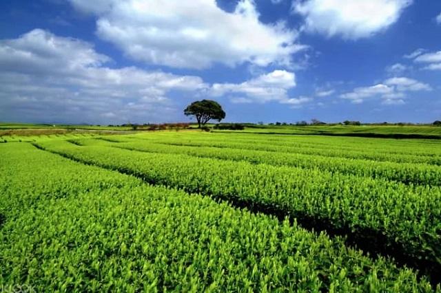 Lần đầu đi du lịch Jeju nên tham quan những địa điểm nào